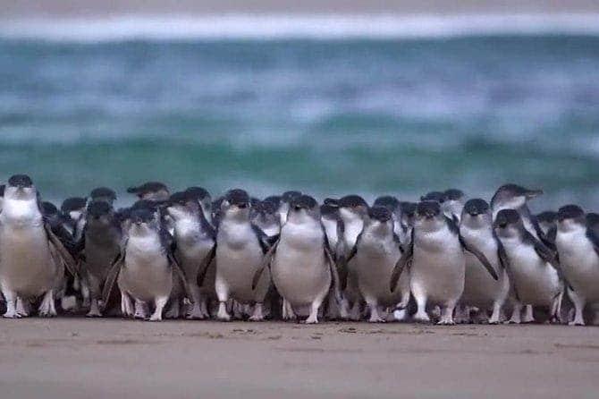 אי הפינגווינים