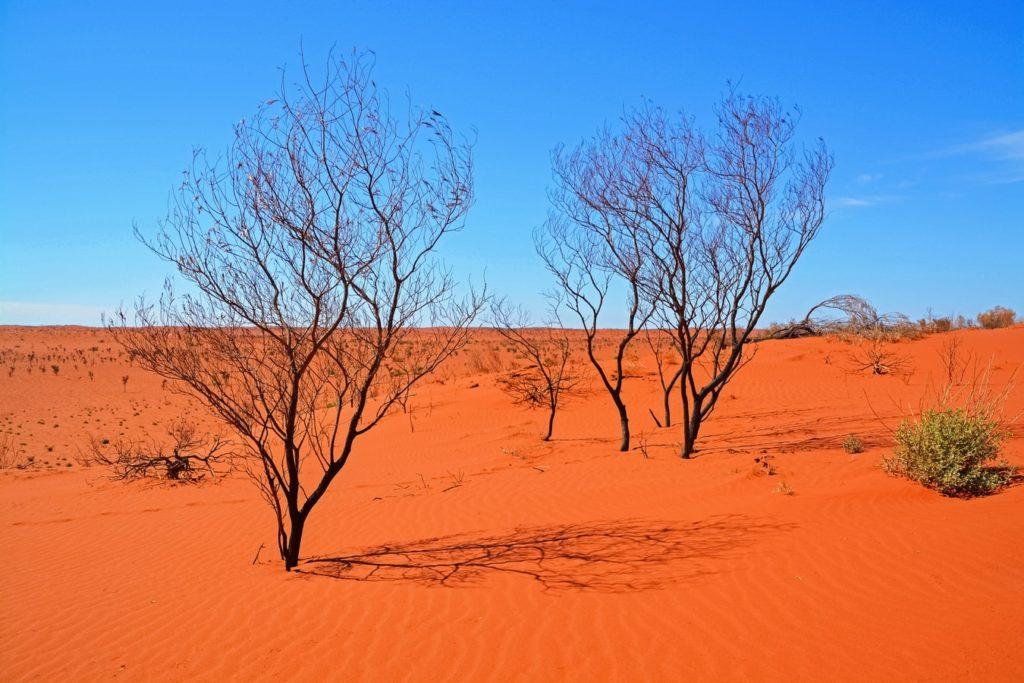 החוף המערבי של אוסטרליה